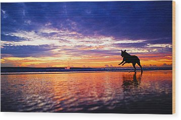 Dog Chasing Stick At Sunrise Wood Print