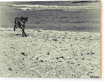 Dog Frolicking On A Beach Wood Print by Ken Morris