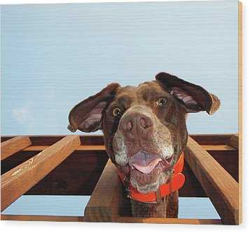 Dog Gone Crazy Wood Print