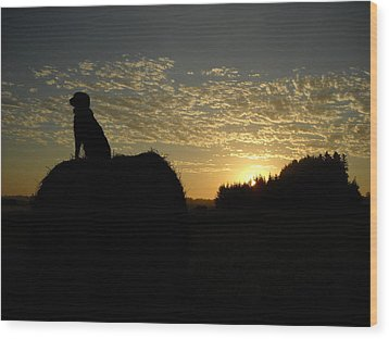 Dog On Hay Greeting Sunrise Wood Print