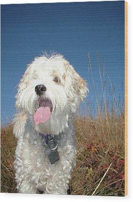 Dog Paintings Dog Oil Paintings Dog Art Dog Prints - Buddy Wood Print by Frances Leigh