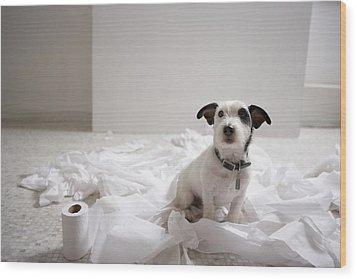 Dog Sitting On Bathroom Floor Amongst Shredded Lavatory Paper Wood Print by Chris Amaral