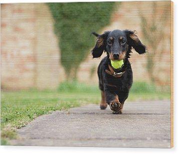 Dog With Ball Wood Print by Ian Payne