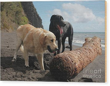 Dogs Playing At The Beach Wood Print by Gaspar Avila