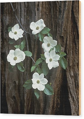 Dogwood And Redwod Wood Print by Joe  Palermo