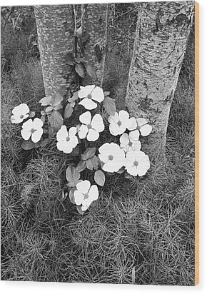 Dogwood And Tree Wood Print