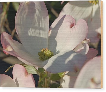 Dogwood Wood Print by Audrey Venute