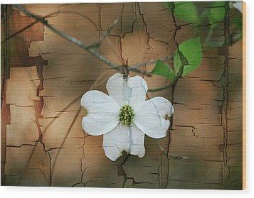 Dogwood Bloom Wood Print by Cathy Harper