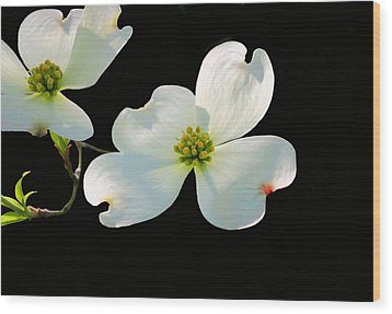 Dogwood Blossoms Wood Print by Kristin Elmquist