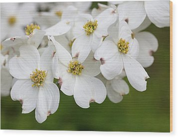 Dogwood Blossoms North Carolina Blue Ridge Parkway Wood Print by Mark VanDyke