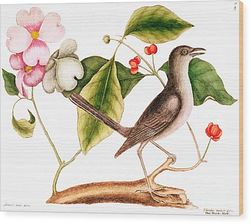 Dogwood  Cornus Florida, And Mocking Bird  Wood Print by Mark Catesby