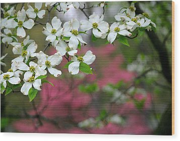 Dogwood Days Wood Print by Living Color Photography Lorraine Lynch