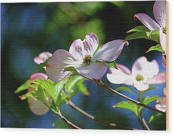 Dogwood Flowers Wood Print by Ronda Ryan