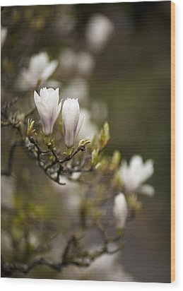 Dogwood Gathering Wood Print by Mike Reid