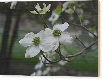 Wood Print featuring the photograph Dogwood by Linda Geiger