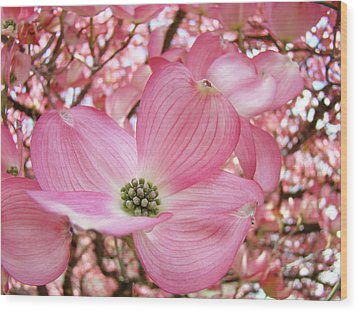 Dogwood Tree 1 Pink Dogwood Flowers Artwork Art Prints Canvas Framed Cards Wood Print by Baslee Troutman
