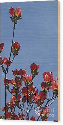 Wood Print featuring the photograph Dogwood by Victor K