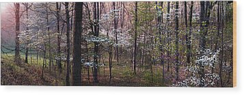 Dogwoods At Sunset Wood Print by Lloyd Grotjan