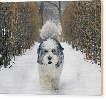 Doing The Dog Walk Wood Print by Keith Armstrong
