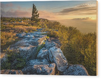 Monongahela National Forset Dolly Sods Wilderness Wood Print by Rick Dunnuck