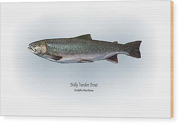 Dolly Varden Trout Wood Print by Ralph Martens