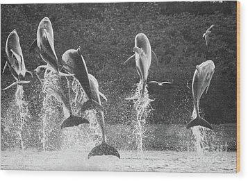 Dolphin Dance Wood Print by Wilko Van de Kamp