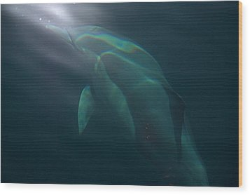 Dolphin Dreaming Wood Print by Odille Esmonde-Morgan
