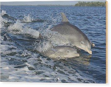 Dolphin Family Wood Print by Tara Moorman Photography