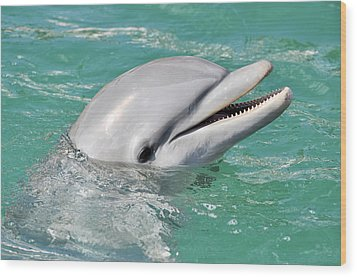 Dolphin Smiling Close Up Wood Print
