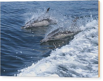 Dolphin Surfing Fantasy Wood Print by Don Kreuter