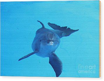 Dolphin Underwater Wood Print by Theresa Willingham