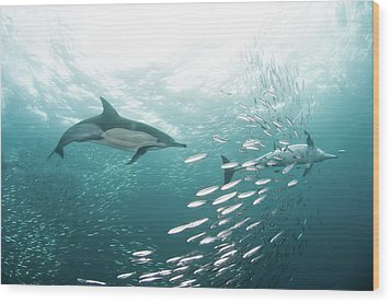 Dolphins Wood Print by Alexander Safonov
