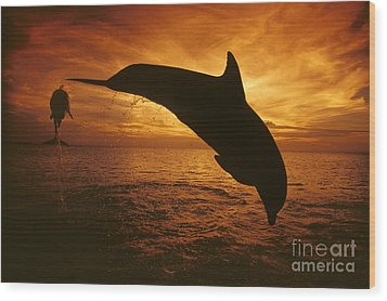 Dolphins And Sunset Wood Print by Dave Fleetham - Printscapes