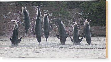 Dolphins Jump Wood Print