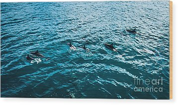 Dolphins Off Of The Na Pali Coast Wood Print