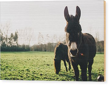 Donkey And Pony Wood Print by Pati Photography