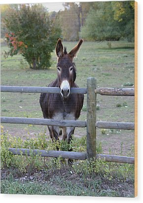 Donkey At The Fence Wood Print by D Winston