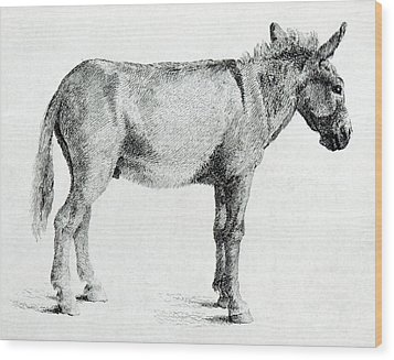 Donkey Wood Print by George Stubbs