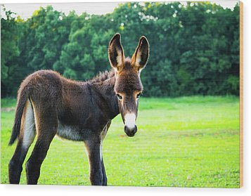 Wood Print featuring the photograph Donkey In The Pasture by Shelby Young