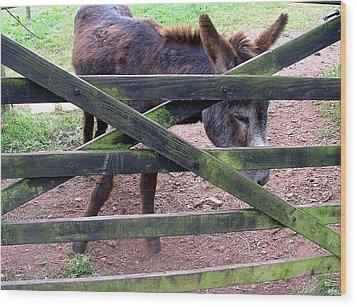 Donkey Ready Wood Print by Mindy Newman