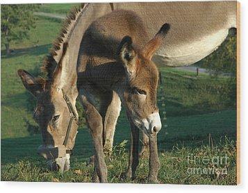 Donkey With Foal Wood Print by Thomas R Fletcher