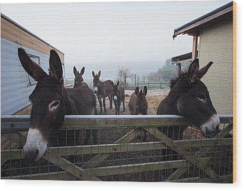 Donkeys Wood Print by Dawn OConnor