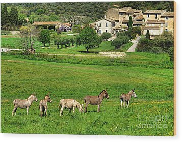 Wood Print featuring the photograph Donkeys In Provence by Olivier Le Queinec