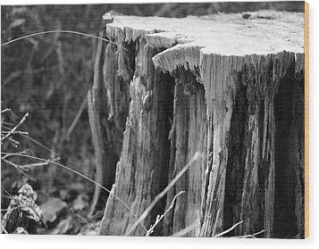 Don't Get Stumped  Wood Print by Bradley Nichol