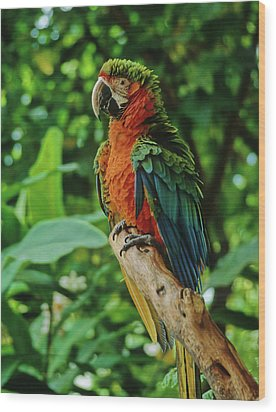 Wood Print featuring the photograph Don't Ruffle My Feathers by Marie Hicks