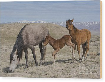 Don't Worry Mom I Got This... Wood Print by Nicole Markmann Nelson