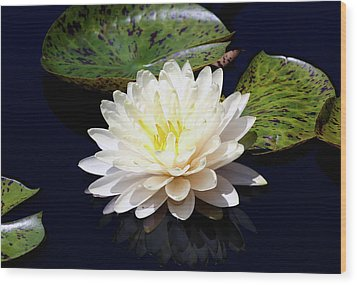Dotty White Lotus And Lily Pads 0030 Dlw_h_2 Wood Print