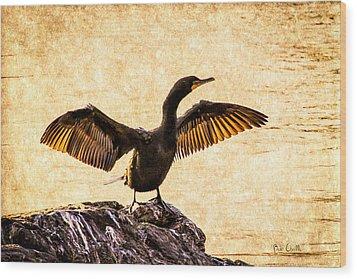Double-crested Cormorant Wood Print by Bob Orsillo