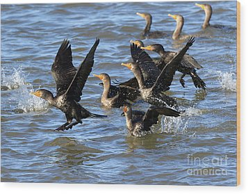 Double Crested Cormorants Wood Print by Louise Heusinkveld