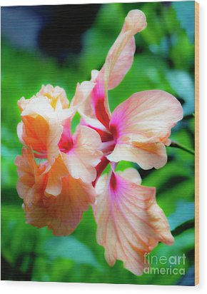 Double Peach Hibiscus Two Wood Print